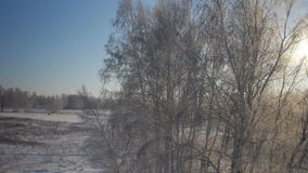 Trees with snow in winter rural park. Sunset in a winter forest.. Frozen tree on winter field and blue sky stock video