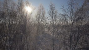 Trees with snow in winter rural park. Sunset in a winter forest.. Frozen tree on winter field and blue sky stock video footage