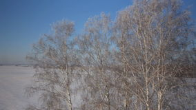 Trees with snow in winter rural park. Sunset in a winter forest.. Frozen tree on winter field and blue sky stock footage