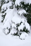 Trees in Snow: Winter Season Stock Image