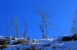 Trees on the snow in winter. Some trees on the snow in winter Royalty Free Stock Photography