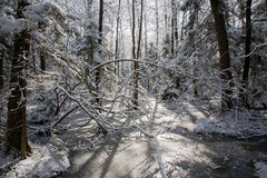 Trees snow wrapped blizzard after Royalty Free Stock Photos