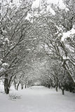 Trees after snowfall Royalty Free Stock Photos