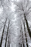 Trees after a snowfall Stock Image