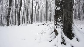 Trees in snowfall stock video footage