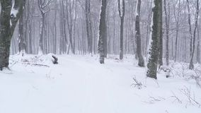 Trees in snowfall. Magical forest winter stock footage