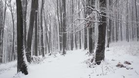 Trees in snowfall. Magical forest winter stock video footage