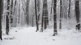 Trees in snowfall stock footage