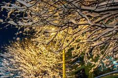 Snow covered trees at night in a park. Trees during a snowfall at night in the park stock photo