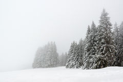 Trees during snowfall in winter Royalty Free Stock Photo