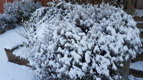 Trees with Snows. In Winter Royalty Free Stock Photo