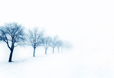 Trees on a snowy day stock image