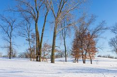 Trees and Snowy Horizon of Battle Creek Park royalty free stock images