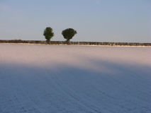 Trees on a Snowy Horizon. A pair of trees against a blue sky on top of a snowy field Royalty Free Stock Photo