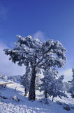 Trees in snowy landscape Royalty Free Stock Photos