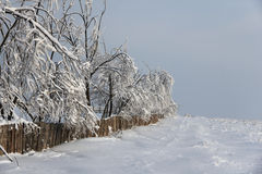 Trees in snowy landscape Stock Photo