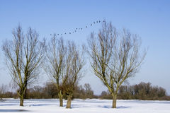 Trees in snowy landscape Royalty Free Stock Photo