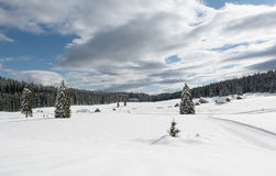 Trees on a snowy meadow. With cross country skiing tracks around them Royalty Free Stock Photo