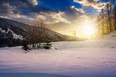 Trees on snowy meadow in mountains at sunset. Forest on a meadow full of snow in high mountains with snowy tops in evening light Royalty Free Stock Photography