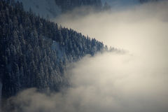 Trees on snowy mountain. Fir trees on side of snowy mountain royalty free stock photos