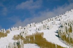Trees on snowy mountainside Royalty Free Stock Photo