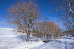 Trees and snowy park. Stock Photography