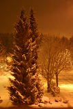 Trees on the snowy street. Tungsten lighted shot of trees and street on a quiet snowy night Stock Photos