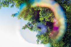 Trees through a soap bubble stock image