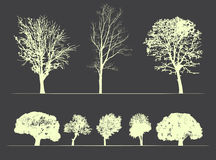Trees on soft dark background royalty free illustration