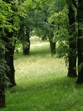 Trees and soft grass Stock Photography