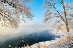 The trees with soft rime lakeside sunrise Royalty Free Stock Photos