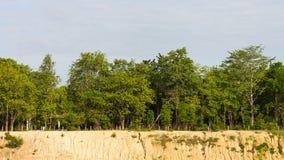 Trees on soil erosion Royalty Free Stock Photos