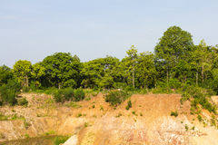 Trees on soil erosion Royalty Free Stock Image