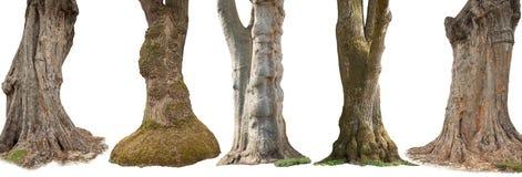 Trees som isoleras på vitbakgrund Arkivbilder