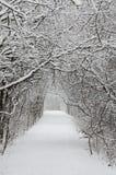 Trees som täckas av snow Arkivbilder