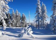 Trees som täckas med snow Arkivbild
