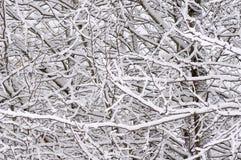 Trees som täckas med snow, Arkivfoto