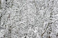 Trees som täckas med snow, Arkivbilder