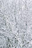 Trees som täckas med snow Royaltyfri Bild