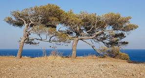Trees at Spinalonga island in Crete near Elounda. Greece Royalty Free Stock Photo
