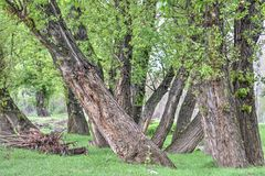 Trees in the spring. Beautiful trees near the river Stock Photos