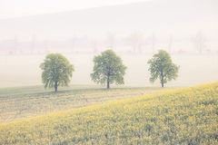 Trees on the spring fields Stock Images
