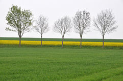 Trees in spring landscape Royalty Free Stock Photography