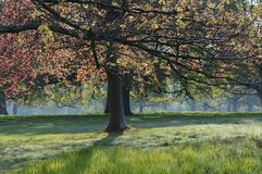 Trees in Spring leaf in the English countryside. Stock Photography