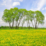 Trees on spring meadow Stock Photography