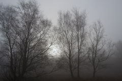 Trees in Spring Mist Royalty Free Stock Photography