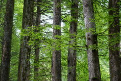 Trees in spring. Trees with new leaves in spring Stock Photography