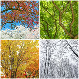 Trees in spring, summer, autumn and winter Royalty Free Stock Photo