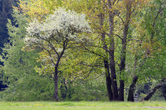 Trees in spring time Royalty Free Stock Photos