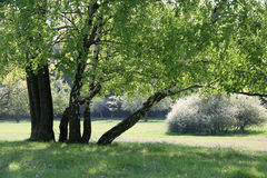 Trees in spring time Royalty Free Stock Photography